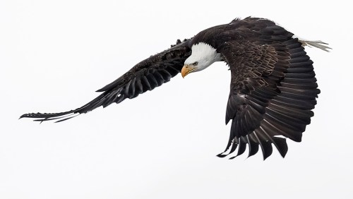 Alaska Bald Eagle Photography Tour_09