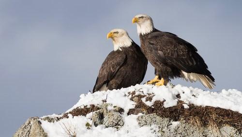 Alaska Bald Eagle Photography Tour_18