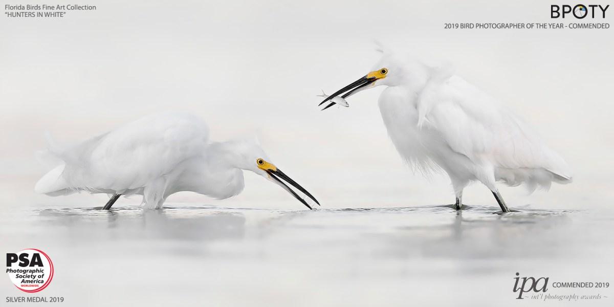 Fine Art Bird Photography- Hunters In White