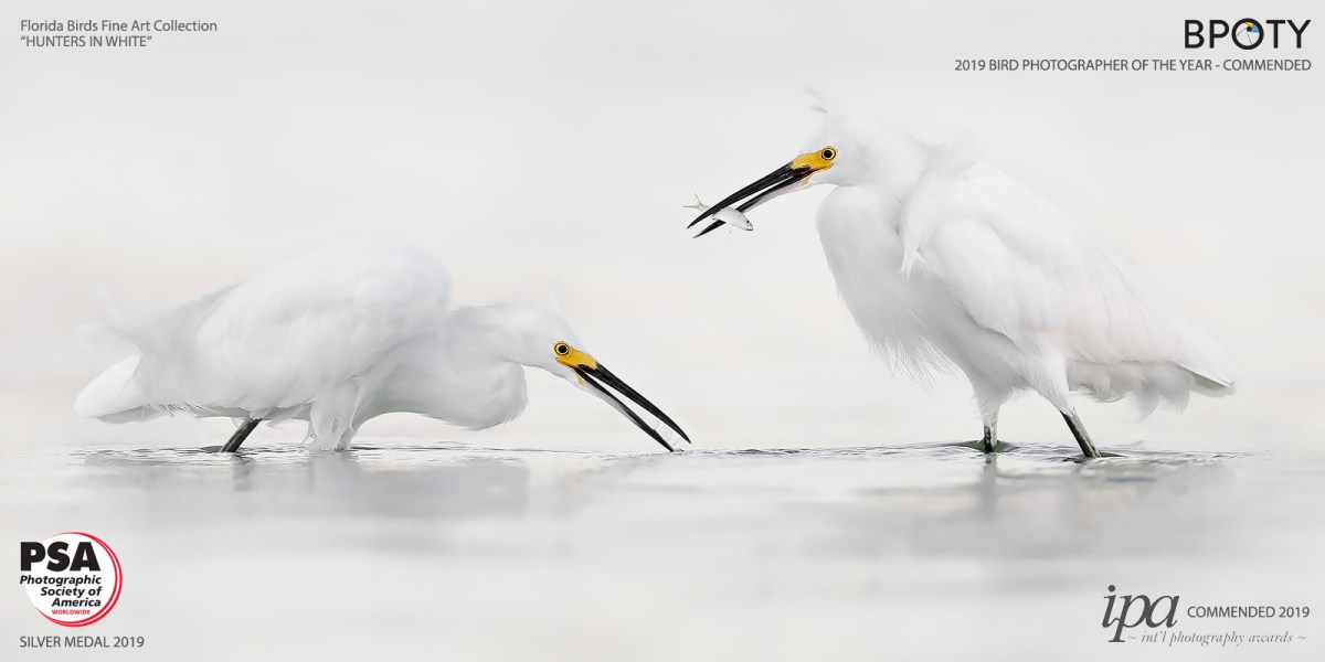 Fine Art Bird Photography_Hunters In White