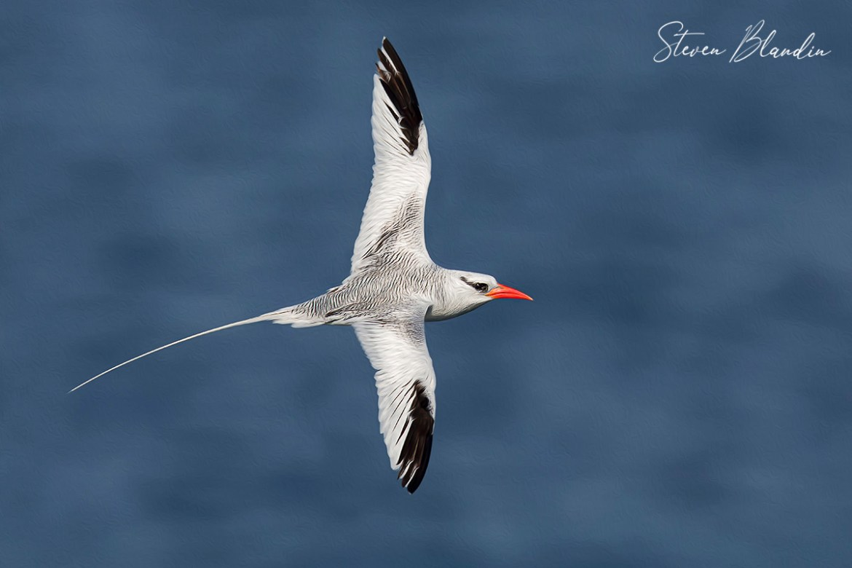 Courtship Flight - Crypto Digital Bird Art NFT