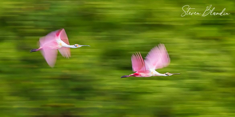 Pink Speed - Crypto Digital Bird Art NFT