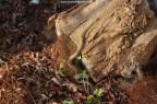 March 25th 2010 - 9.00 AM: radix male basking.
