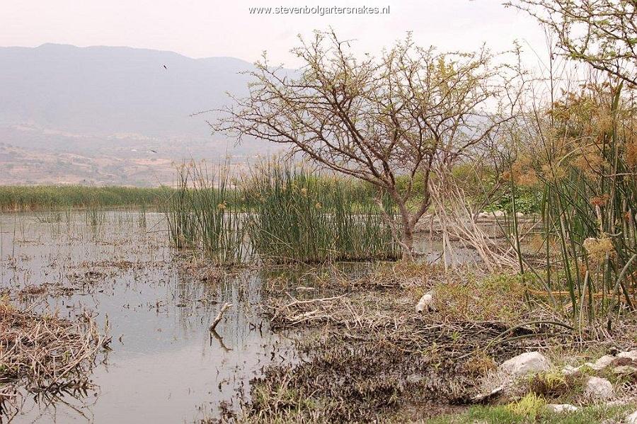 Habitat of Thamnophis melanogaster canescens: lake Cajititlan, Jalisco, Mexico.