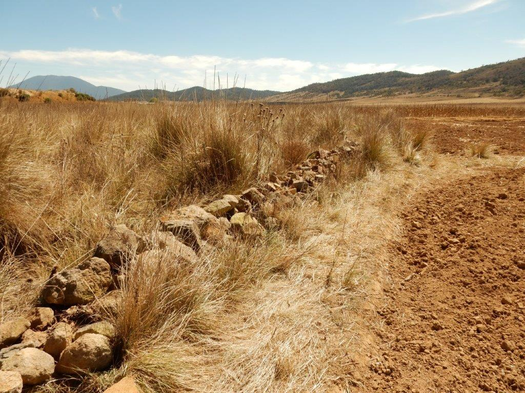 Habitat T. scaliger near Atlacomulco in March (very dry)
