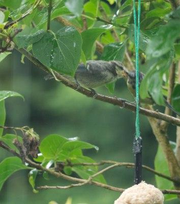 Mum feeding young bird