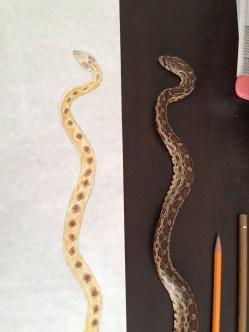 Snake base color