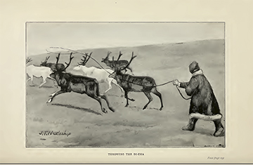 Reindeer-facing page237_1