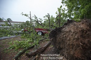 Nature-unearthed_21-May-13