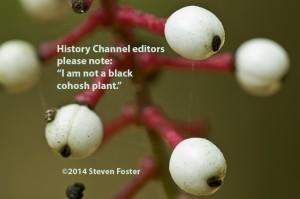 Actaea pachypoda, doll's eyes, white baneberry, baneberry