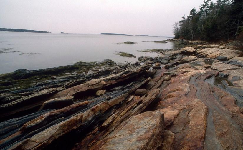 Exploring Medicinal Plants in Maine