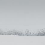 Grasses through the snow - Steven Kennard 2013
