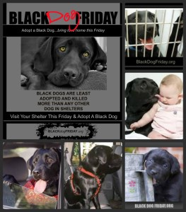 black dog friday save a life campaign