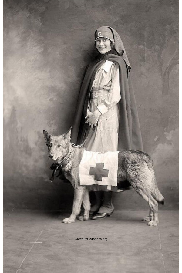 American Red Cross Service Dogs