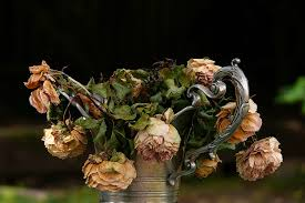 Watering Dead Flowers