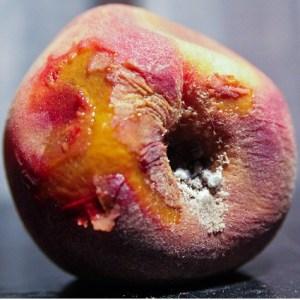 [Rotting Peach]