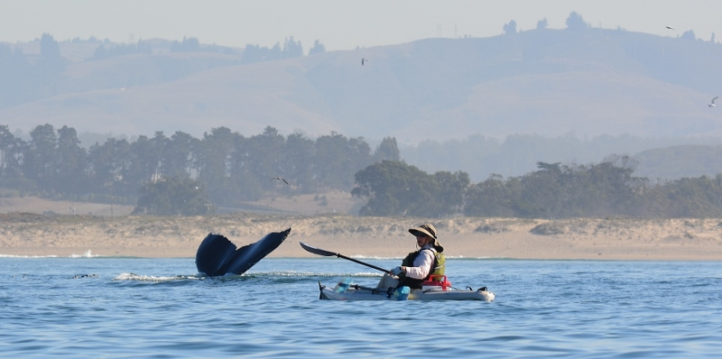 Kathy and a humpback whale's tail, with the Central Coast in the background. Photo by Steven T. Callan