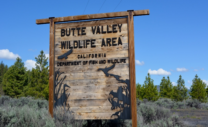 The Butte Valley Wildlife Area is our favorite birding site in Siskiyou County.
