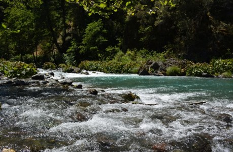 The McCloud River is a fly-fisherman's paradise.