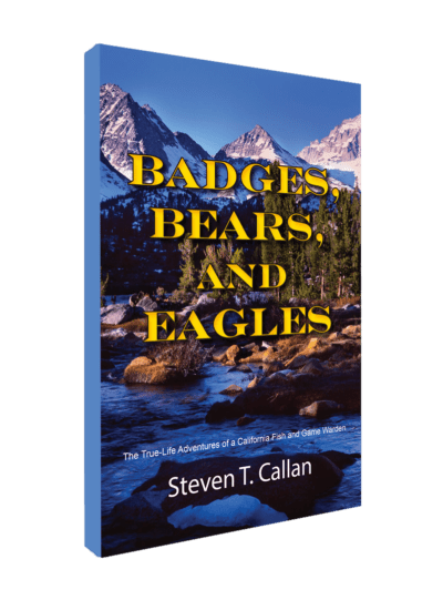 badges_bears_slanted-2