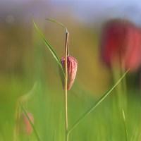 South Charente Spring