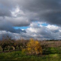 Orchards and Estuary