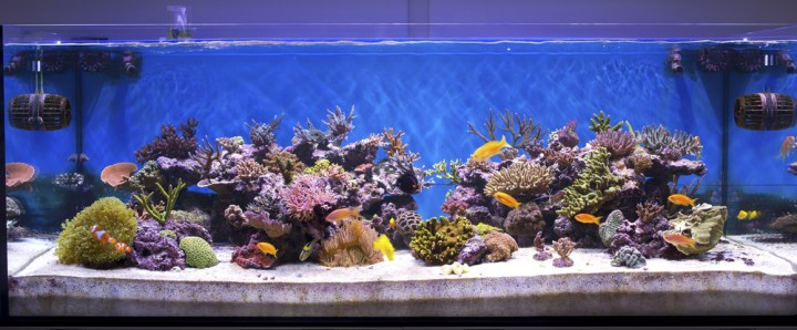 Saltwater aquarium care – starting a saltwater tank