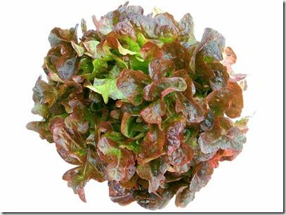 oak_leaf