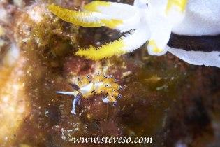 nurdibranch