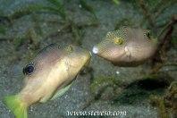 toby fish kissing