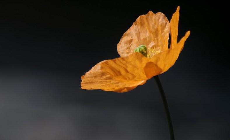 Nouvelles photos de fleurs alpines ajoutées à la galerie