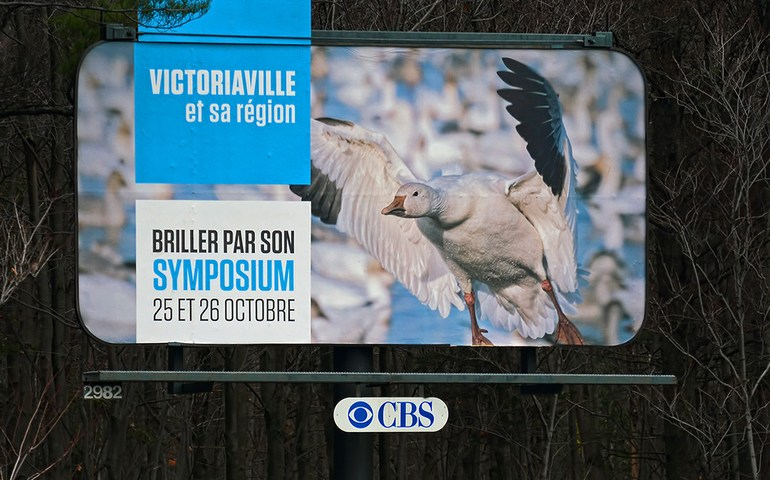 Snow Geese in Fall Migration – Réservoir Beaudet, Victoriaville