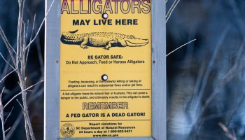 Gators May Live Here And So Much More The Savannah National Wildlife Refuge Steve Troletti Photography