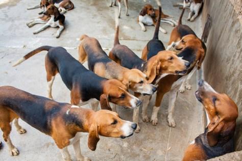 animals-23-2010-07-30-20100730-134321_6939
