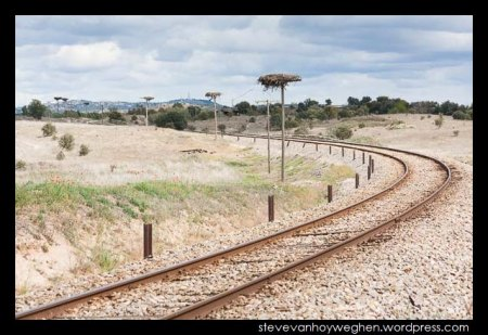 Stork nests and rail