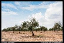 Steve_Van_Hoyweghen-Extremadura-08-2012-04-03-_MG_2866