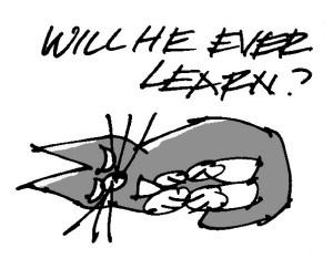 2013 anniversary card cartoon cat detail steve wallet architect