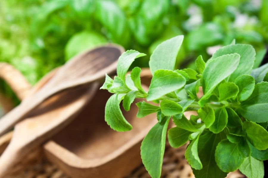What are the usage of stevia?