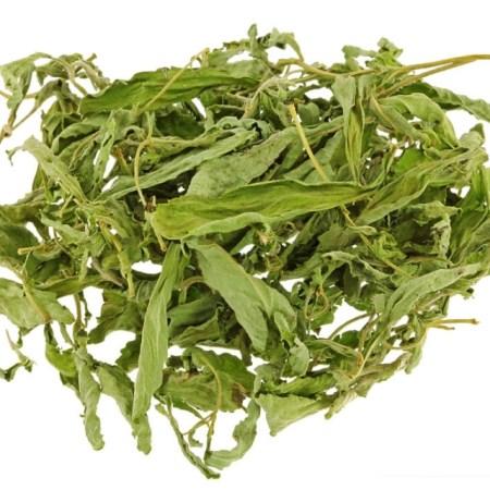 Dried stevia leaves in tea