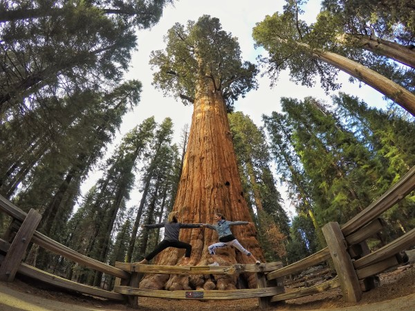 Photo of two yogis doing warrior pose in front of General Sherman