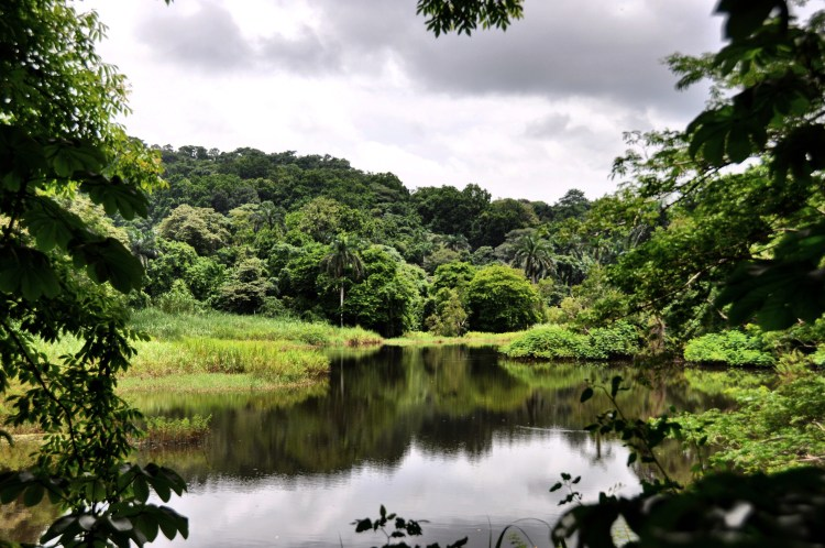 Photo of the jungle forest of Panama and its reflection in the water