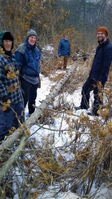The stewardship team gingerly hauls a dead cedar through the brush.