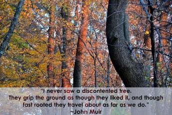 Tree Philosophy