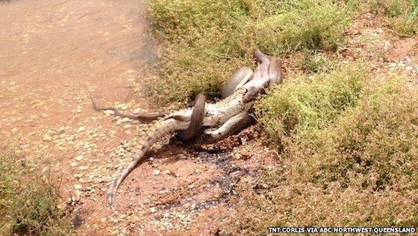 snake-croc1