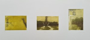 Untitled (#5 [Richmond Park], postgrad '94), Photoetching, AP, NFS