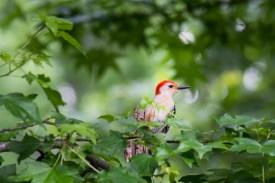 Birds-4673