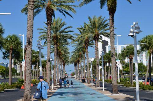 Palm Trees Tropicana Field