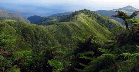Flax on peaks, St Helena Island