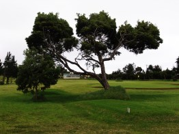 Longwood golf course, St Helena Island