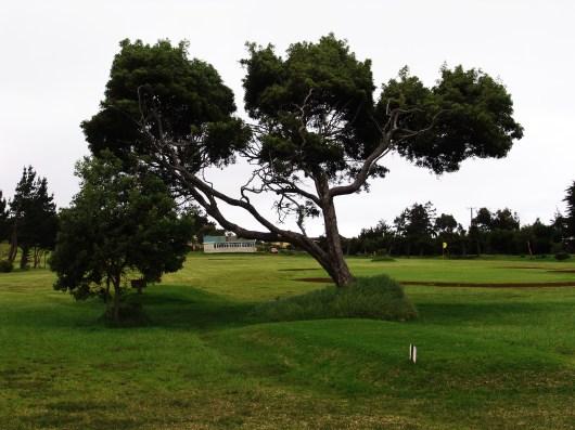 Longwood golf course, St Helena Island